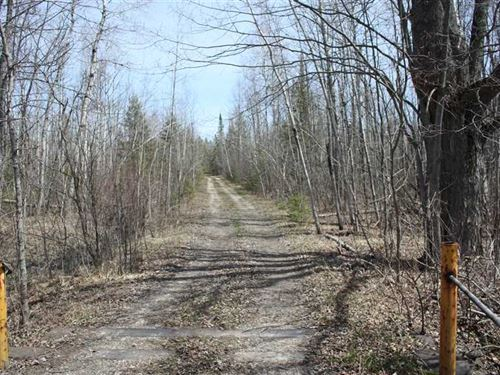 Beautiful 720 Acre Turnkey Hunting : Posen : Presque Isle County : Michigan
