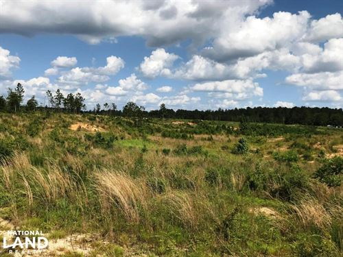 Sandhill Timber And Farm Land : Richton : Greene County : Mississippi