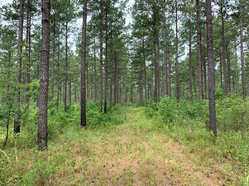 Mature Timber And Great Hunting : Columbia : Houston County : Alabama