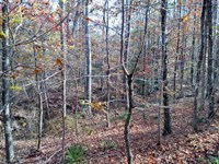 Beautiful 100 Acre Hunters Paradise : Buena Vista : Marion County : Georgia