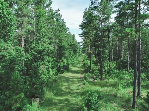 74 Acres Managed Timberland : Conway : Horry County : South Carolina