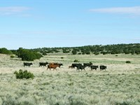 72 Acre Northern AZ Ranch $361/Mo : Saint Johns : Apache County : Arizona