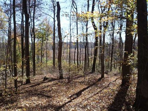 153.5 Acres Loaded With Big Deer : Charlotte : Dickson County : Tennessee