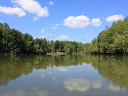 The Lindsey Farm : Reidsville : Rockingham County : North Carolina