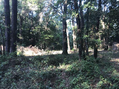 Screven Hunt Camp : Sylvania : Screven County : Georgia