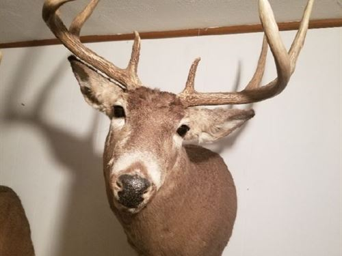 Hunting Land in Muscoda, Wisconsin : Muscoda : Grant County : Wisconsin