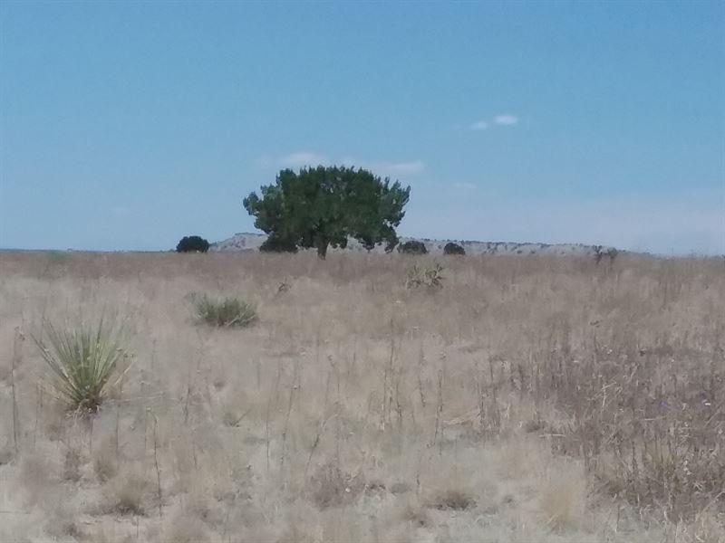 For Sale By Owner Colorado >> Las Animas Ranch Ranch For Sale By Owner Trinidad Las Animas County Colorado Id 202993