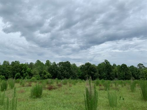 35 Acres In Covington County In Sem : Seminary : Covington County : Mississippi