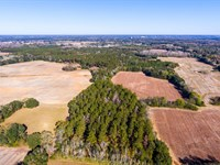 140 +/-Acres Farmland And Timber : Blakely : Early County : Georgia