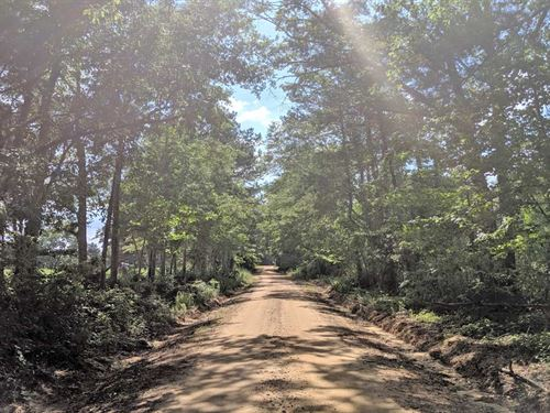 McSwain Road Tract : Ariton : Barbour County : Alabama