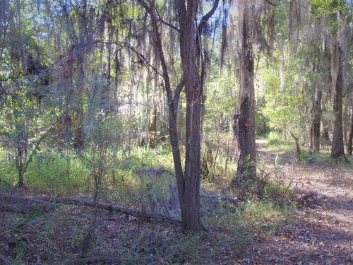 Bayou Dorcheat Tract, Webster Pari : Cotton Valley : Webster Parish : Louisiana