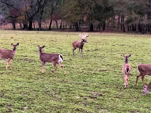 3-020 Smith Farm High Fence : Ramer : Montgomery County : Alabama