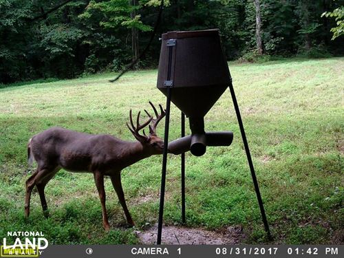296 Acres, Timber, Foodplots, Hunt : Columbia : Adair County : Kentucky