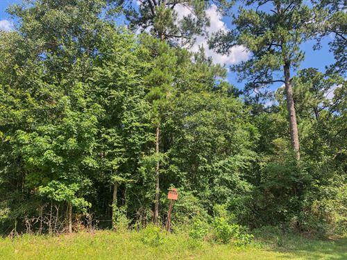 304 Acres Hwy 190 285003 : Woodville : Tyler County : Texas