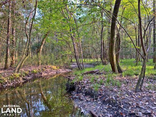 Mineola Joiner Branch Hunting : Mineola : Monroe County : Alabama