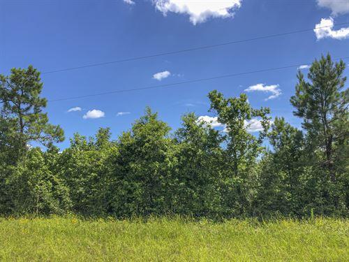97 Acres Caney Estates 311029 : Chester : Polk County : Texas