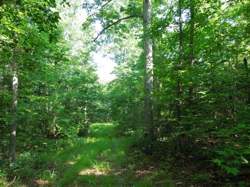 Affordable Hunting Tract : Littleton : Halifax County : North Carolina