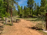 Access 300,000 Acre National Forest : Ramah : Cibola County : New Mexico