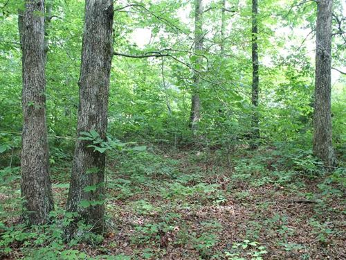 40.71 Acres Hance Hollow Rd, Jacks : Red Boiling Springs : Jackson County : Tennessee