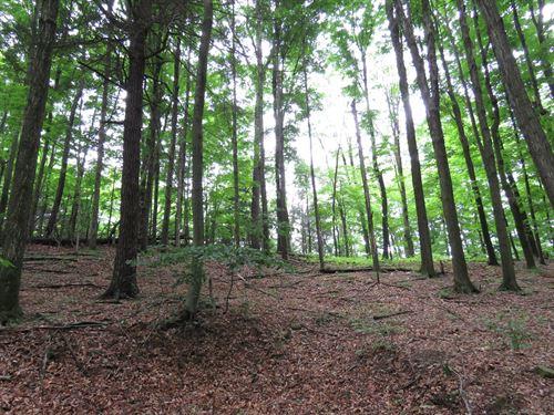 Hunting Building Acreage Tioga : Millerton : Tioga County : Pennsylvania