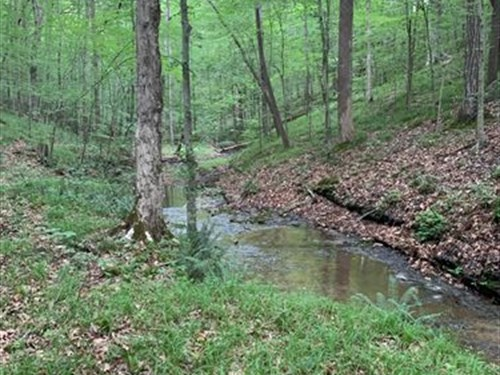 524 Acres Near Leipers Fork : Franklin : Williamson County : Tennessee