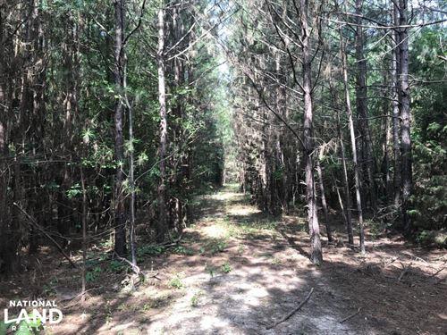 10 Acres Timberland : Brinkley : Monroe County : Arkansas