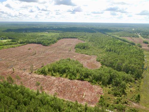 181 Acre Hunter & Investor Deal : Hortense : Brantley County : Georgia