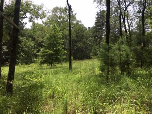 15.14 Acre Timber And Recreational : Jacksonville : Cherokee County : Texas