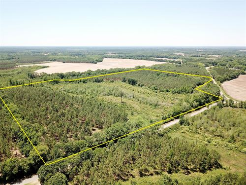 56 Acres, Hunting, Pines, Homesite : Black : Geneva County : Alabama