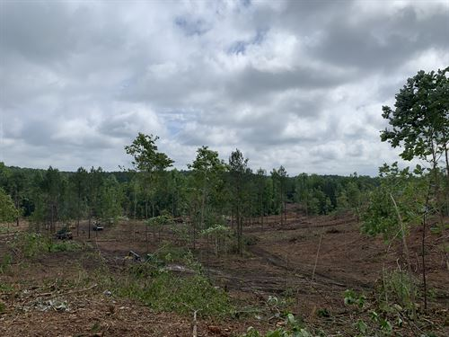 Clearcut & Young Timber : Clanton : Chilton County : Alabama