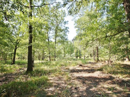 Unrestricted Wooded Acreage : Centerville : Leon County : Texas