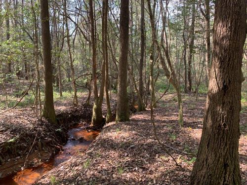 57 Ac, Hardwoods, Pines & Creeks : Goshen : Pike County : Alabama