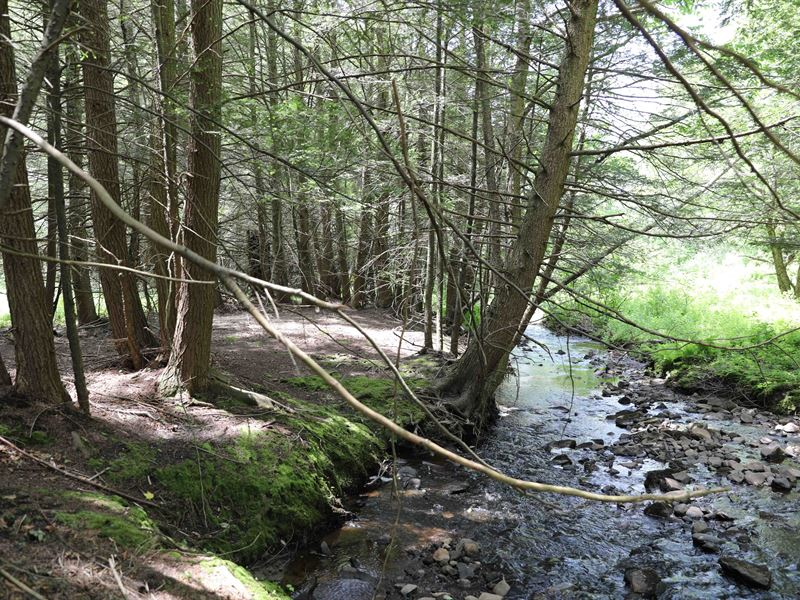 Catskills Land With Creek And Views : Ranch for Sale : Liberty : Sullivan  County : New York