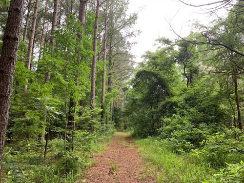27.5 Acres In Holmes County In Lexi : Lexington : Holmes County : Mississippi