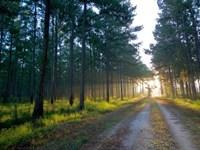 Glover Plantation : Ridgeland : Jasper County : South Carolina