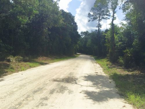 44 Acres Of Wooded Property : Fort White : Columbia County : Florida