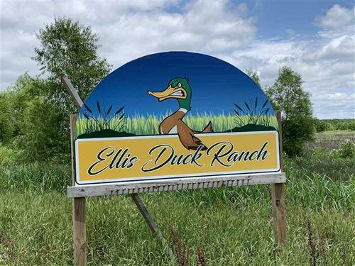 Teal Duck Club