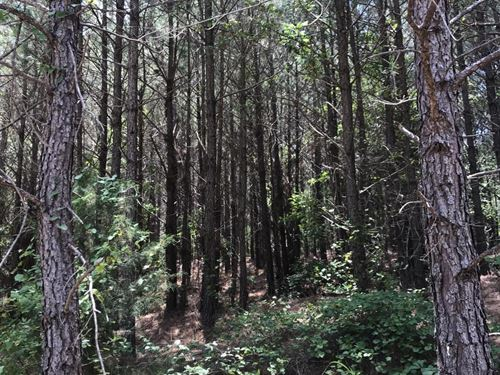 Browns Mill Creek Tract : Vernon : Lamar County : Alabama