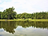 57 Acre Farm With 4 Acre Pond : Wrightsville : Johnson County : Georgia