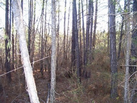197 Acres Of Hunting Land : Kosciusko : Attala County : Mississippi