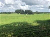 Owner Finance, 17 Acs, Lake Access : Brooksville : Hernando County : Florida