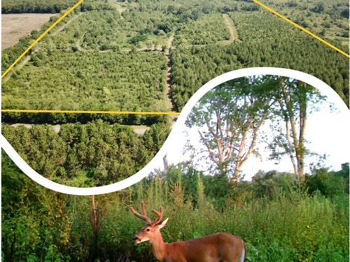 107 Acres Deer Hunting Land : Black : Geneva County : Alabama