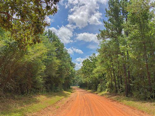 50 Acres Cr 4223 : Jacksonville : Cherokee County : Texas