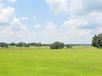 141 Acres On Beautiful Hwy 25A : Reddick : Marion County : Florida