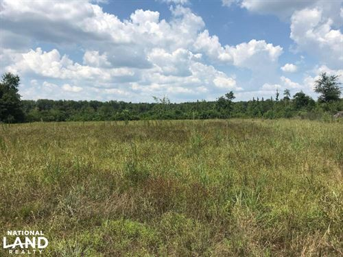 Brewer Road Hunting Tract : Columbus : Lowndes County : Mississippi