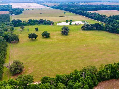 Burnett Farm : Pinetta : Madison County : Florida