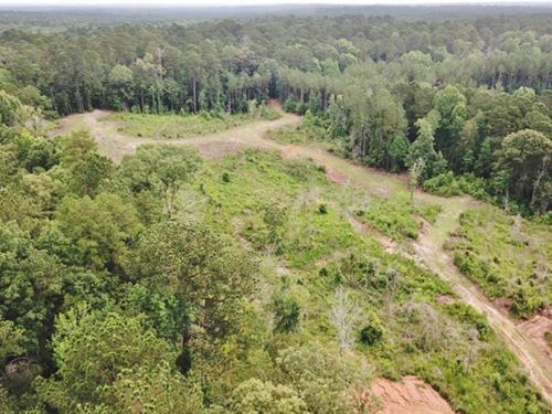 Small Hunting Tract Connecting To : Crosby : Wilkinson County : Mississippi