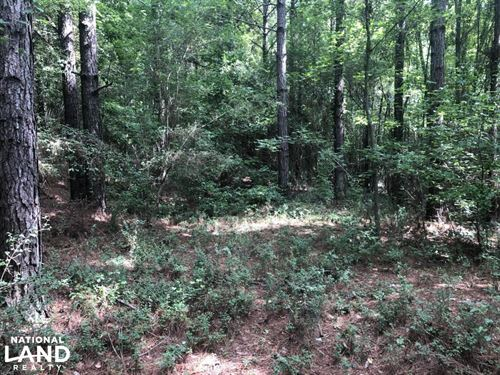 Sylvarena Timber Tract : Sylvarena : Smith County : Mississippi