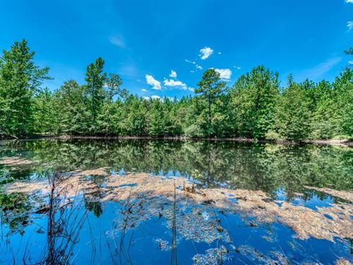 200+/- Acres Hunting Land : Oakwood : Leon County : Texas