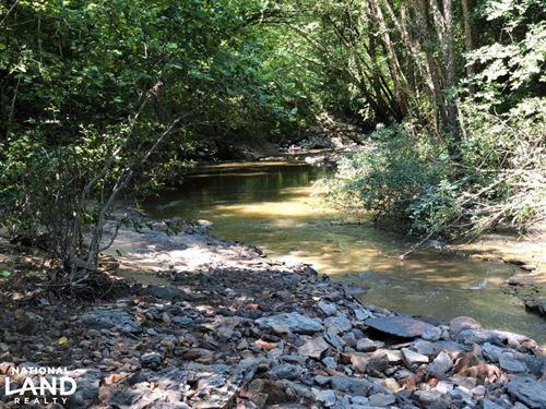 Pine Plantation at Lucknuck Creek : Houlka : Pontotoc County : Mississippi